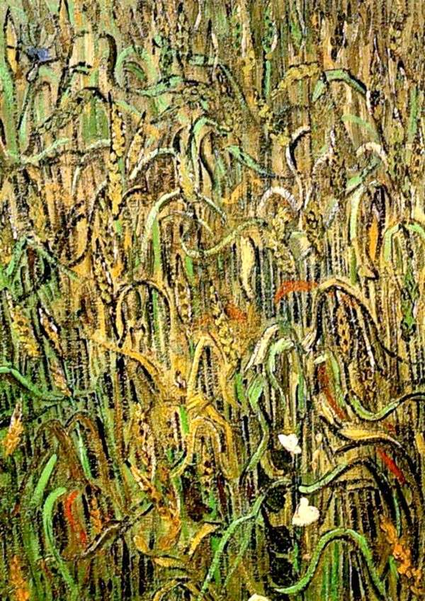小麦の穂   Vincent Van Gogh