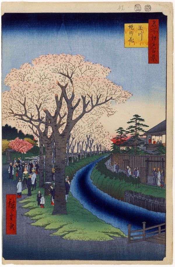 玉川のダムに沿った桜の木   歌川広重