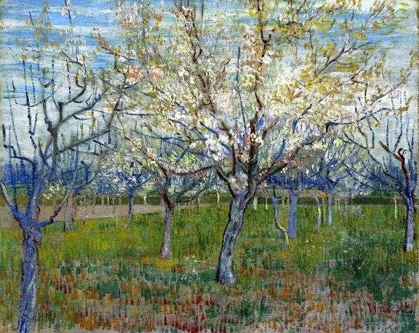 開花アプリコットの果樹園   Vincent Van Gogh