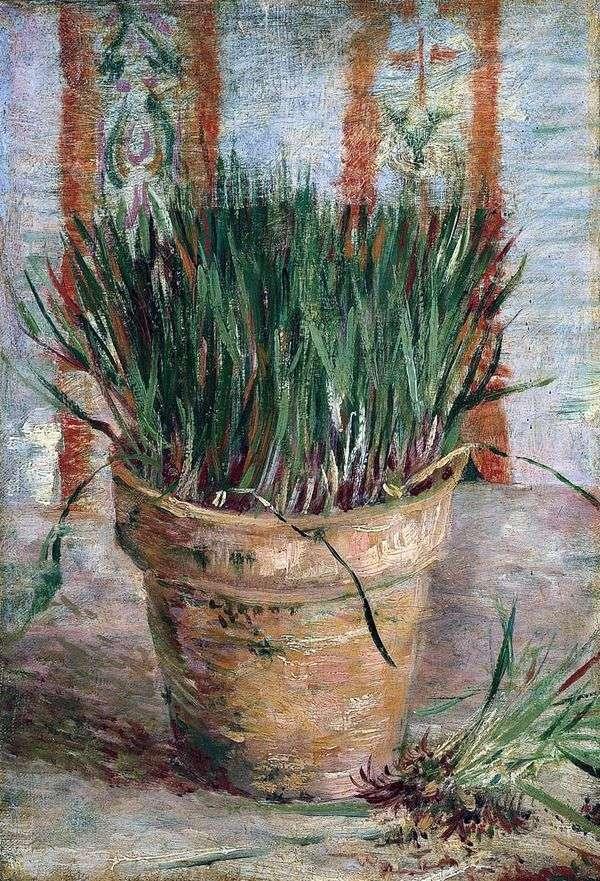 タマネギの植木鉢   Vincent Van Gogh